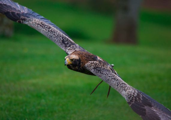 The International Center For Birds Of Prey, Newent