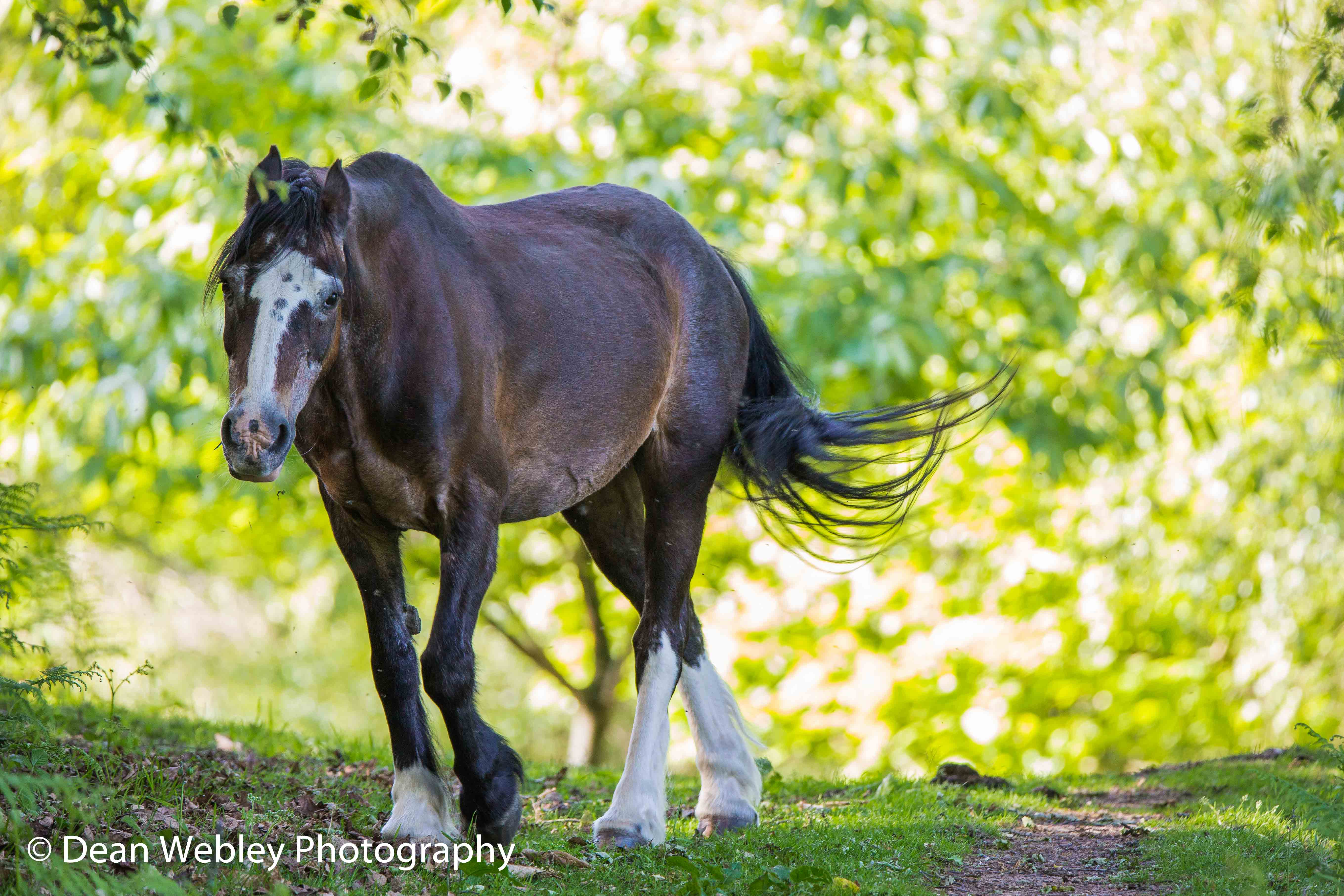 Horse On May Hill